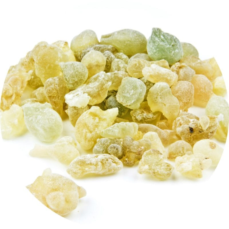Frankincense Serrata Essential Oil - Living Libations