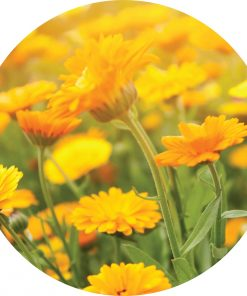 Living Libations - Calendula Essential Oil