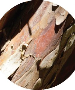 Living Libations - Cedar, Red Essential Oil
