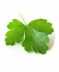 Living Libations - Coriander Essential Oil