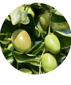 Living Libations - Jojoba Organic Oil