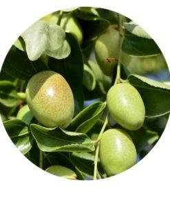 Living Libations - Jojoba Organic Oil