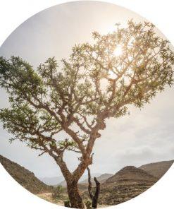 Living Libations - Sacred Frankincense Essential Oil