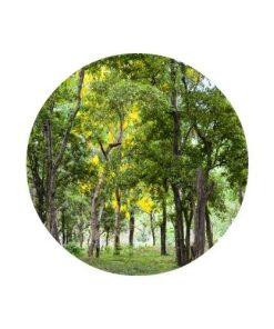 Living Libations - Sandalwood Nut Carrier Oil Round