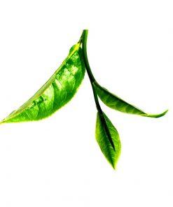 Green Tea Facial Toner - Delizioso Skincare