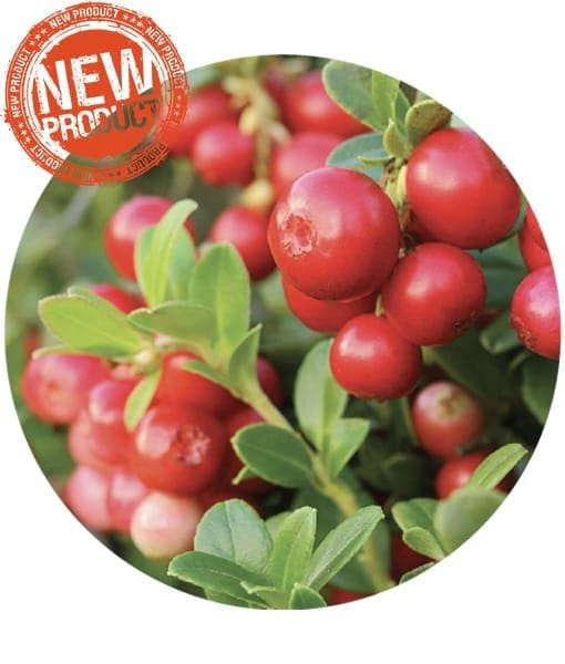 Cranberry Seed Carrier Oil - Living Libations