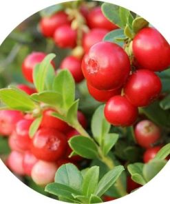 Living Libations Cranberry Seed Carrier Oil