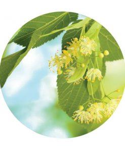 Linden Blossoms Essential Oil - Living Libations