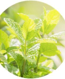 Living Libations - Peppermint Essential Oil
