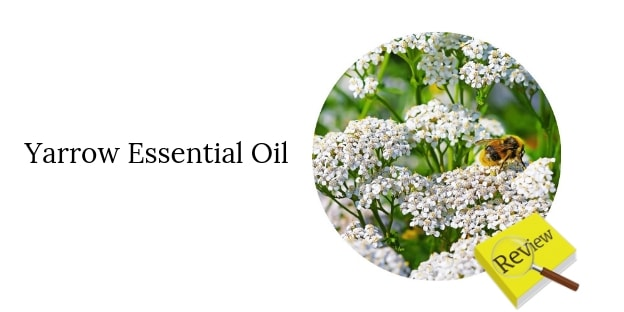 Review - Yarrow Essential Oil - Living Libations