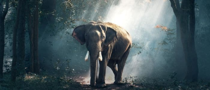 Living Peacefully - Elephant