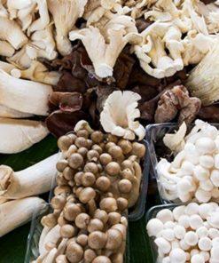 Medicinal Mushroom Products