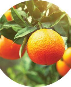 Living Libations - Clementine Essential Oil