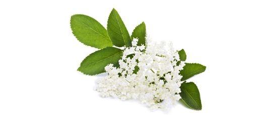 Benefits of Elderberries | Organic & Natural Skincare