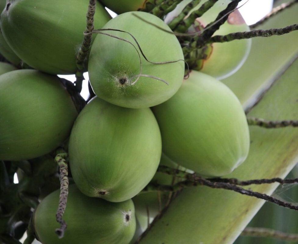 Is coconut oil comedogenic? | Living Libations | Nadine Artemis