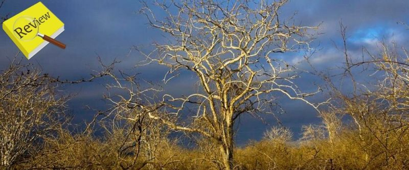 Review | Palo Santo Essential Oil | Living Libations